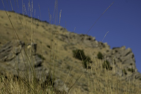 mountain grass with shallow depth of field with East Mountain, Utah and sky in background