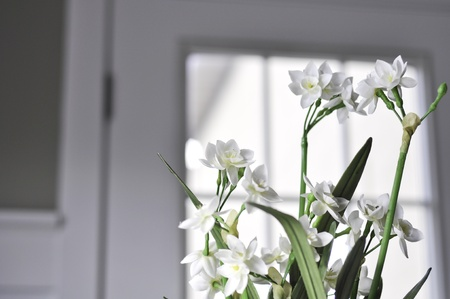 paperwhite flowers in a  modern house with a white door in the background