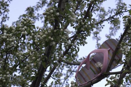 pink child shoe flip flop stuck in tree