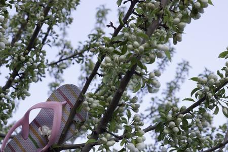 pink children s shoe or flip flop stuck in tree