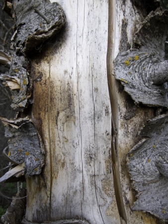 tree trunk with thick bark for backgrounds or borders patterns and textures photo
