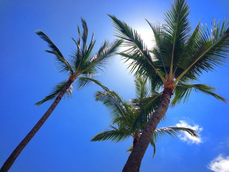 Palm trees with sun behind and a bright blue sky