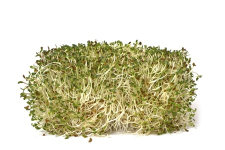 Organic and raw alphalpha sprouts on white background Stock Photo - 19198959