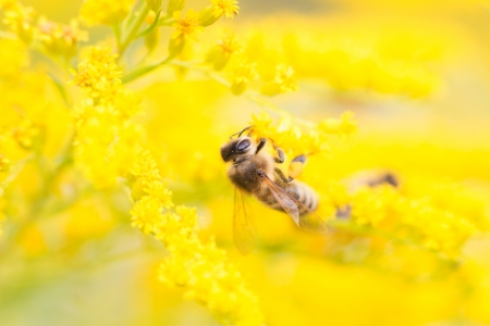Bees are flying insects closely related to wasps, ants photo