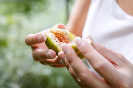 feuille de figuier: Figues fraîches bio de l'arbre