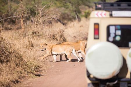 game reserve: Wildlife safari tourists on game drive Stock Photo