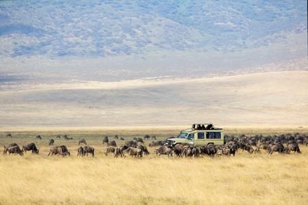 game drive: Safari tourists on game drive in Ngorongoro