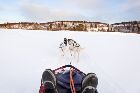 huskies: Musher and passenger in a dog sleigh with huskies in cold winter landscape. Stock Photo
