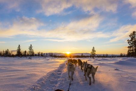 Musher und Passagier in einem Hundeschlitten mit Huskies ein kalter Winterabend.