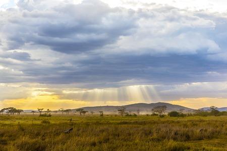 east africa: Beautiful and dramatic warm evening in Serengeti Tanzania, Africa.