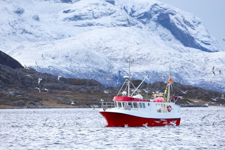 artic circle: Red fishing boat with a many birds flying around. Stock Photo