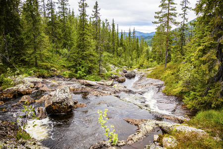 creek: Beautiful creek in the wild forest and mountain landscape in Telemark, Norway. Untouched nature and environment.