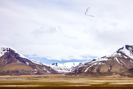 Birds flying in V formation between mountains in arctic summer landscape . Clouds over mountains covered with snow in the cold arctic environment at Svalbard.