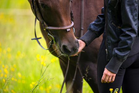 Close-up of woman feeding her arabian horse with snacks in the field Stock Photo