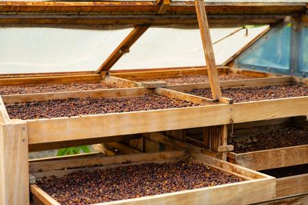 Seitenansicht der Bio-Kaffeebohnen, die in Kisten im Freien trocknen