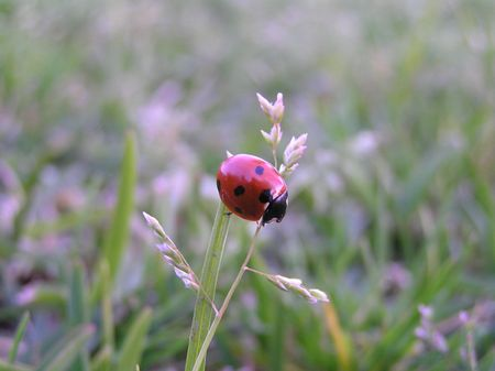 Ladybug photo