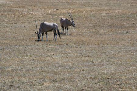 Wild Animals Фото со стока - 2661168