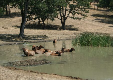 Animals in a Pond