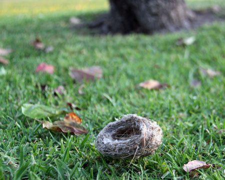 木から落ちた巣します。