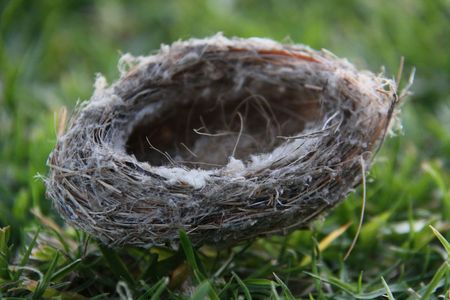 空のハチドリの巣は草の上