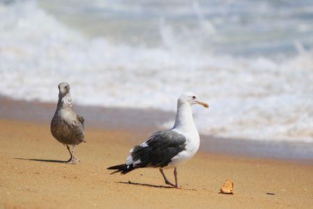 2 seagulls on the sandy beach. Фото со стока