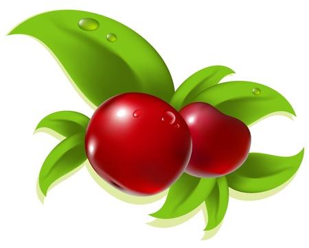 frayed: berry Illustration