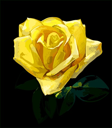 green and yellow: rose hand drawing