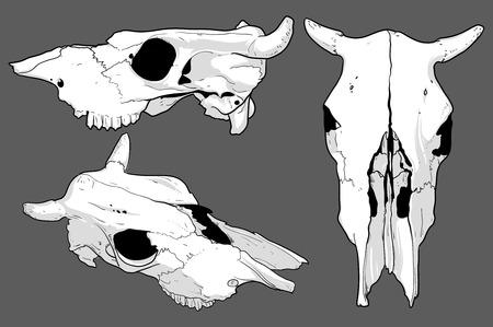 decomposition: set of skulls cow