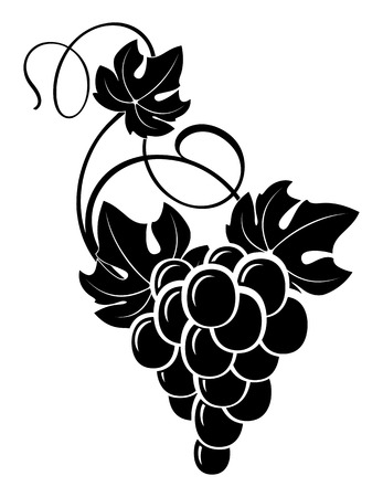 freehand drawing bunch of grapes Imagens - 44499718