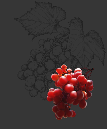 bunch: Bunch of red grapes