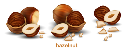 Hazelnuts. The whole nuts, half nuts and half a nuts in shell on a white background.3D vector. High detailed realistic illustration