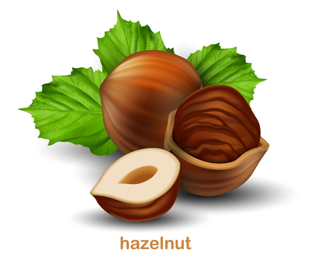 Hazelnuts. Whole walnut, half walnut and walnut in half shell with green leaves on a white background.  3D vector. High detailed realistic illustration