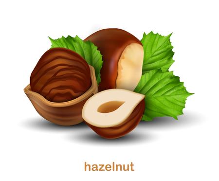 Noisettes. Noix entière, demi-noix et noix en demi-coquille avec des feuilles vertes sur fond blanc. vecteur 3D. Illustration réaliste très détaillée