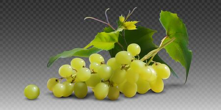 A branch of yellow ripe grapes on a gray  background.  3D vector. High detailed realistic illustration.