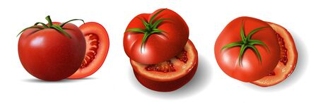 Three red halved tomatoes on a white background. Highly realistic illustration. Illustration