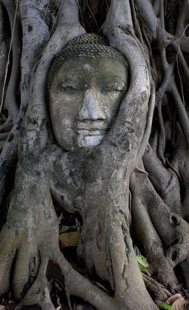 encapsulated: Ancient buddha head encapsulated by tree, Ayutthaya