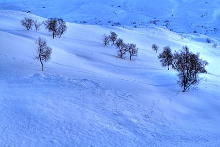 Animal tracks in the snow, in the Norwegian mountains Stock Photo - 6442288