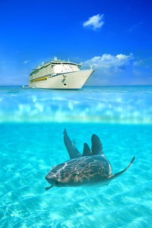 Nurse shark in the crystal clear waters at Grand Cayman, with a cruise liner above water in the background