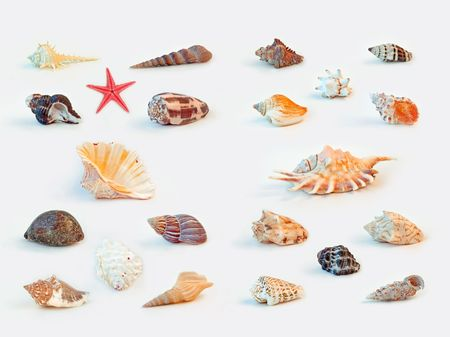 murex shell: Collection of sea shells on white background