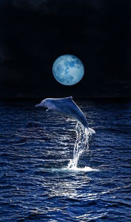 Dolphin playing in the moonlight