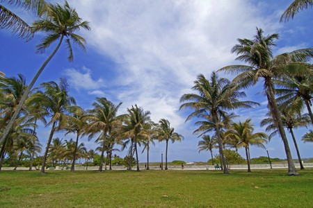 Palm trees at Miami south beach, Florida Stock Photo