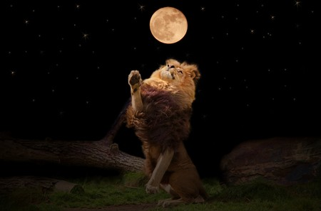 leo: A lion reaching for the moon
