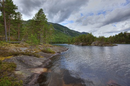 Colorful picture of a Norwegian forest, Vr�dal Stock Photo - 7606684