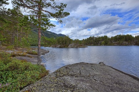 Colorful picture of a Norwegian forest, Vrådal Stock Photo - 7606685