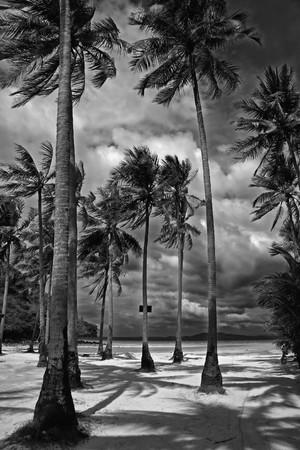bomen zwart wit: Zwart-wit foto van palmbomen op een strand in Thailand