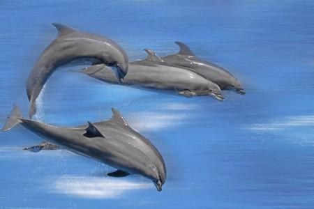Cinco delfines elevarse a través del agua  Foto de archivo