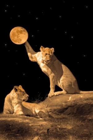 stone lion: Lioness playing with the moon, another lioness resting Stock Photo