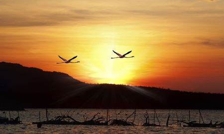 Flamingos flying in the sunset over the beautiful Lake Gotomeere   photo