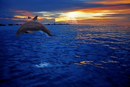 dolphin jumping: Dolphin jumping
