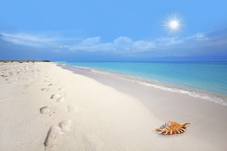 Footsteps and seashell in the white sand at Boca Grandi beach, Aruba